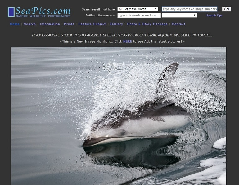 sea pics marine photography